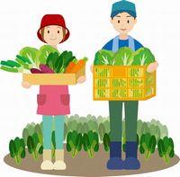 野菜生産者